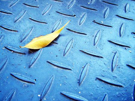 winter leaf: WInter Leaf 1 Stock Photo