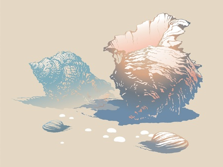 oceanside: Seashells on the beach. Vector illustration. Illustration