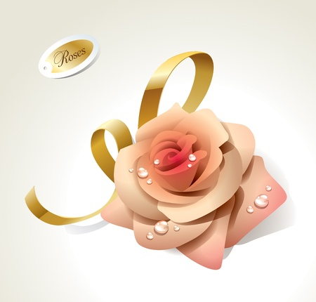 Pink rose in dewdrops with golden ribbon. Vector