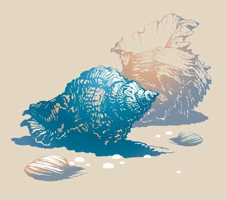 Seashells on the sand. Vector illustration.