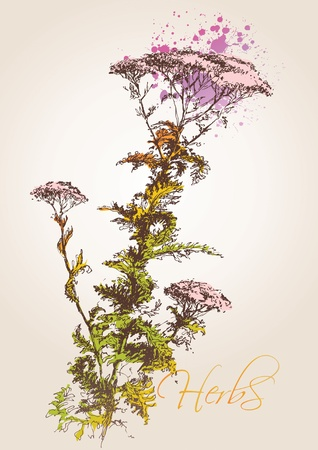 summery: Yarrow herb (Achillea millefolium). A sketch made by a pen with spots and sprays on a beige background. Vector illustration.