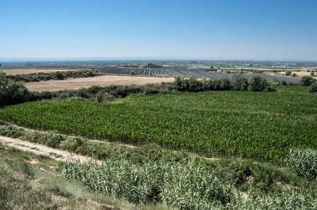pla: Lleida pla