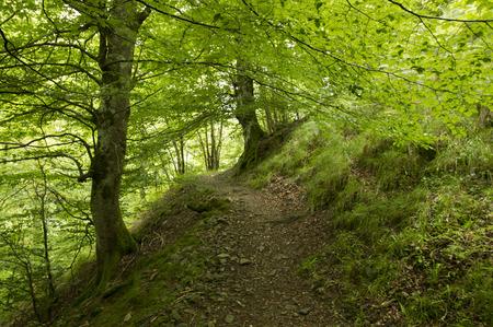 pilgrim journey: Camino de Santiago from Saint Jean Pied de Port to Roncesvalles via Valcarlos