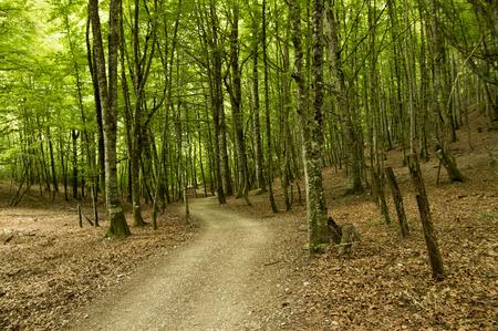 camino: Camino de Santiago from Roncesvalles to Zubiri