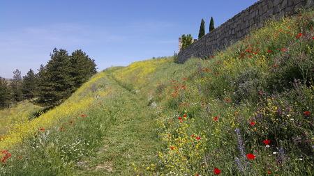 Surroundings of the village of Medinaceli in Soria
