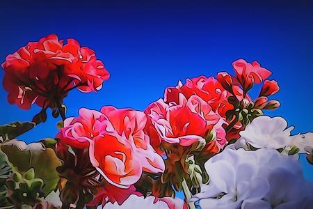 A macro photograph of a geranium flower in the garden Stock Photo