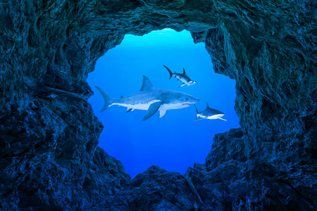 Illustration a Sharks underwater from inside a cave underwater