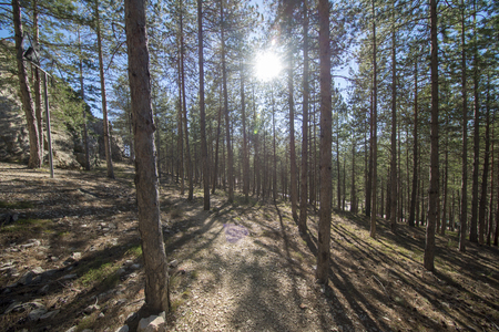 Pine forests around the town of Morella, Spain