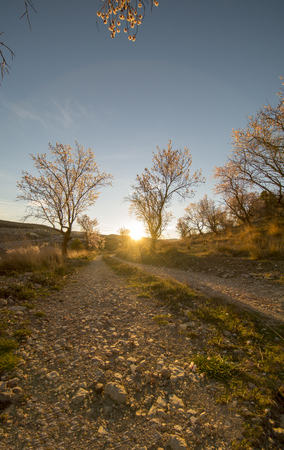 Path between almond trees in a beautiful sunrise, Spain