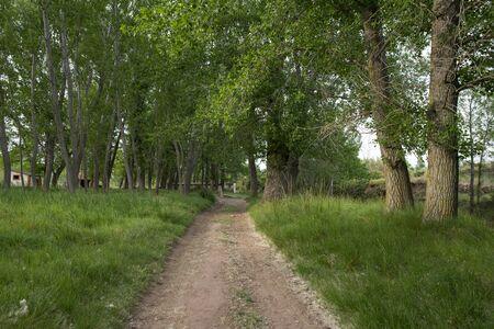 Forest in the village of Valvona de Teruel, Spain Stok Fotoğraf