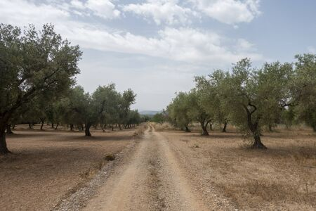 Road of the august road through San Mateo, Spain