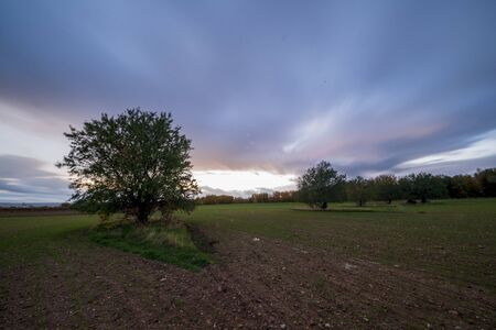 Trees in the field during sunset of Soria, Spain