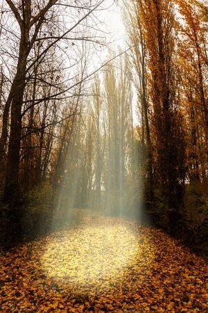 Sun rays between trees on a road in autumn, Spain Stockfoto