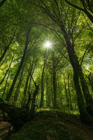 The rays of the sun between the trees, Camino de Santiago, Spain