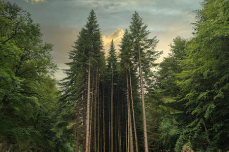 Forest in Irati jungle in Navarra, Spain Reklamní fotografie - 151218698