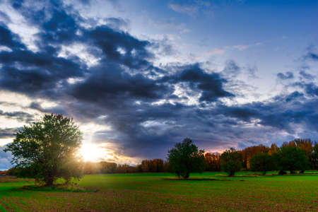 Two trees at sunset in the countryside of soria, Spain Reklamní fotografie