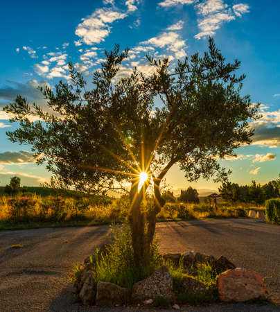 The rays of the evening sun behind a lonely tree, Spain