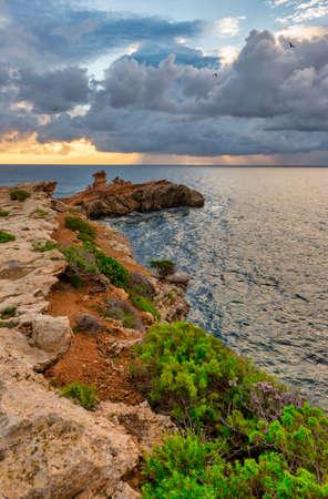 Cape martinet in Ibiza during a beautiful sunrise, Spain