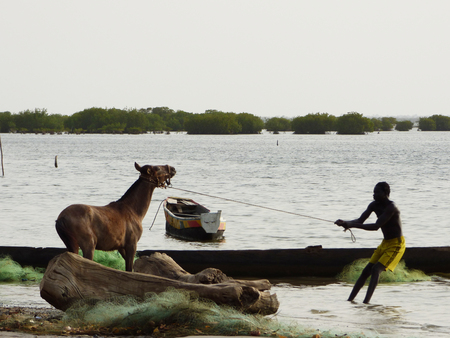 Horse and pulling man in Senegal