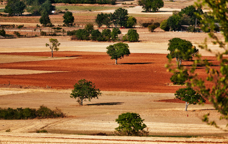 Umbro landscape in the summer.  Different colors allow to distinguish between ploughed fields and the others.Trees and brush wood create spots of green