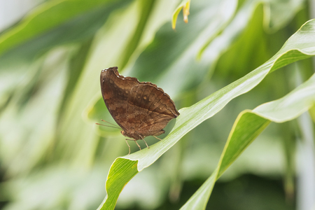 葉の上に茶色の蝶,焦点外の背景,色のシェーディング,日光