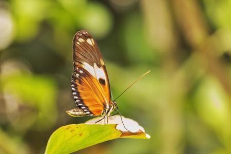 葉の上の単一の蝶,焦点外の背景,飽和色,選択的焦点,