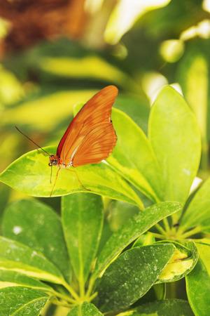 葉の上の蝶,明るい昼光,彩色,