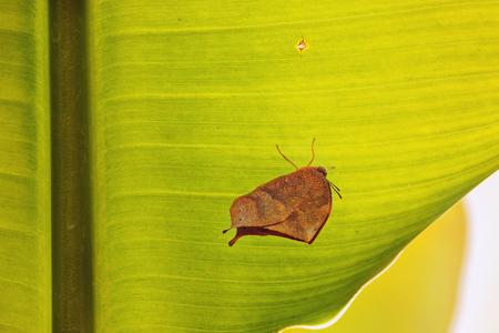 葉の上の蝶、下のビュー、美の葉のテクスチャ、飽和色、明るい日光