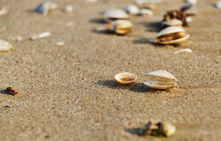 Seashells on the beach make a light shadow on the sand ,early morning ,selective focus ,horizontal composition