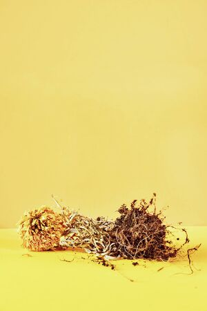 Beautiful dried orange flower on a colored background ,the flower is on handful of land and roots