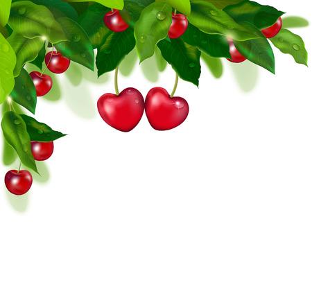 fruit stem: Heart of cherries on a cherry tree