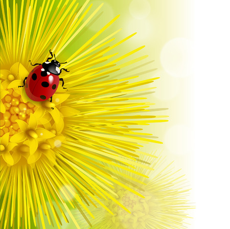 agriculture wallpaper: floral background with a coltsfoot and ladybug Illustration