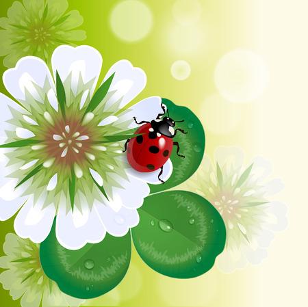 trefoil: trefoil floral background with ladybug