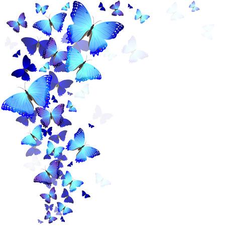 Beaux papillons bleus Banque d'images - 27785658