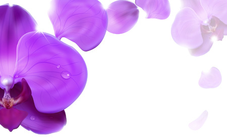 floral background of lilac orchids Illusztráció