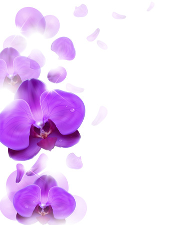 orchid isolated: floral background of purple orchids