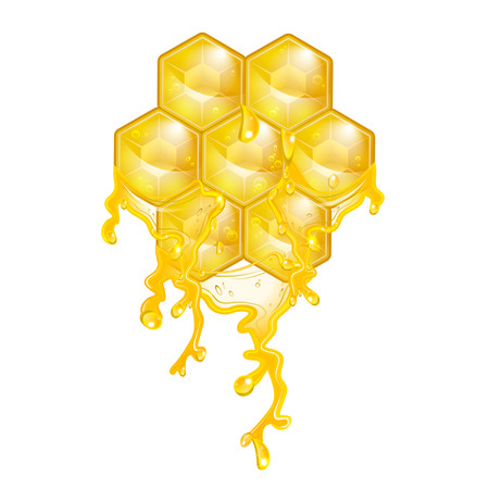 apiculture: honeycomb on a white background