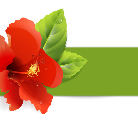 floral background with red hibiscus