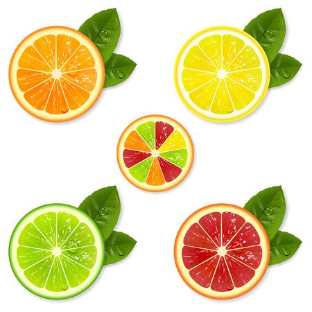 lemon lime: fetta di agrumi insieme di arancio, limone, lime, pompelmo Vettoriali