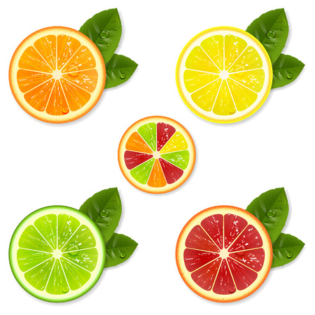 citrus fruit slice set of orange, lemon, lime, grapefruit Vectores