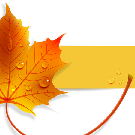 color image: banner with maple leaves and drops of water Illustration