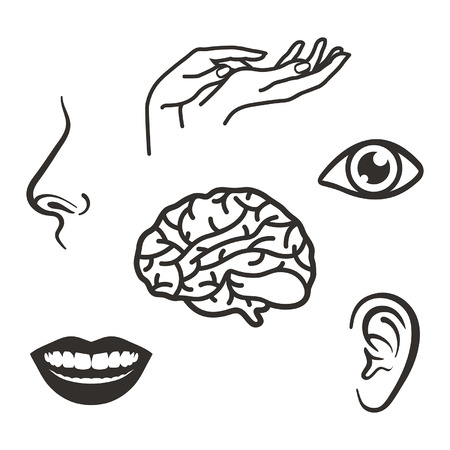 senses: parts of the face and body of the five senses
