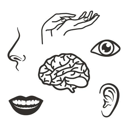 Teile des Gesichts und des Körpers der fünf Sinne Standard-Bild - 48759905