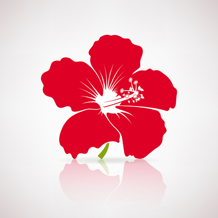 red hibiscus flower: Red hibiscus flower on a light background