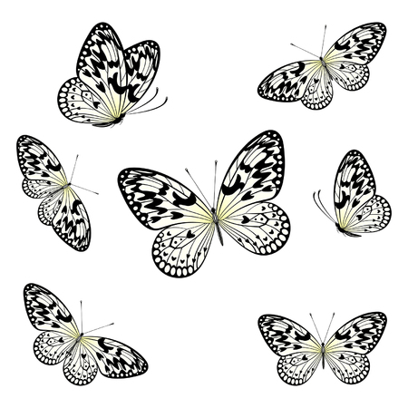 spotted: stylized butterflies flying on a white background Illustration
