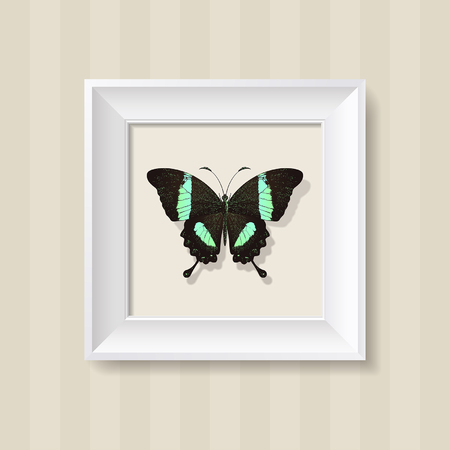 green butterfly: green butterfly in a white frame on a wall background