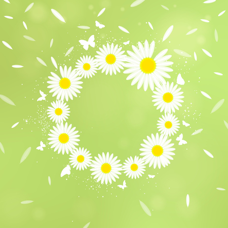 wreath of white chamomiles on a green background
