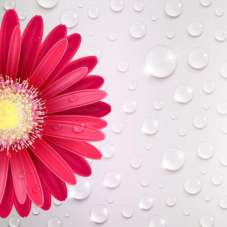 red gerbera flower on a background of water drops Illustration