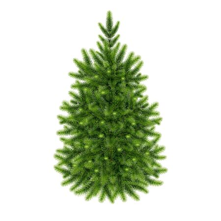 fluffy green  fir-tree on a white background