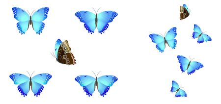 set of blue butterflies on a white background Illustration